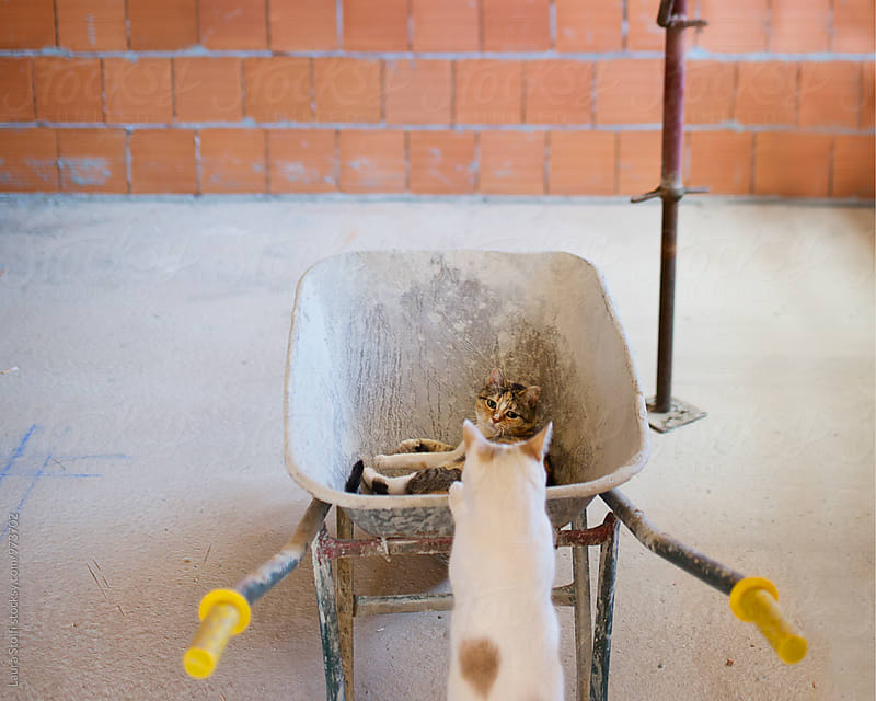 Two cats playing together on building site with barrow by Laura Stolfi for Stocksy United