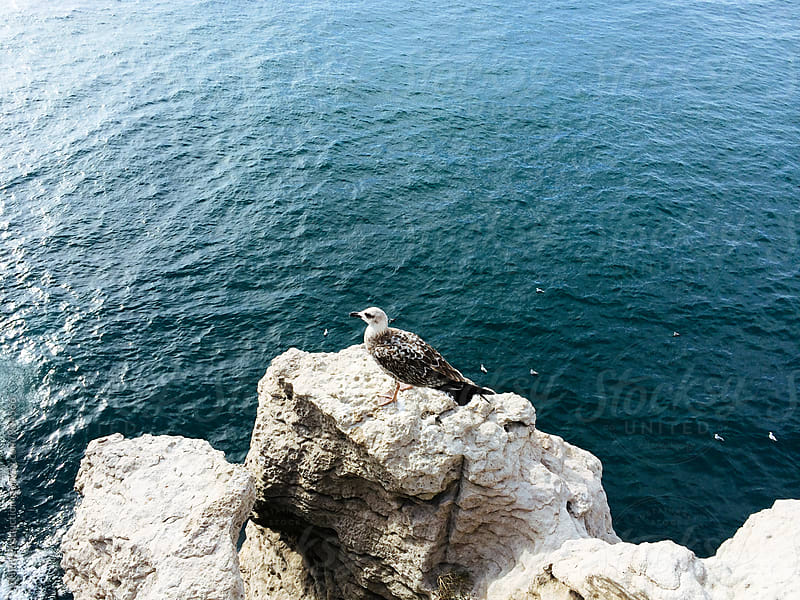 Seagull on the rock by Artem Zhushman for Stocksy United
