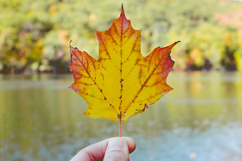 Hand Holding Colorful Autumn Leaf With Lake In Background by kelli kim for Stocksy United