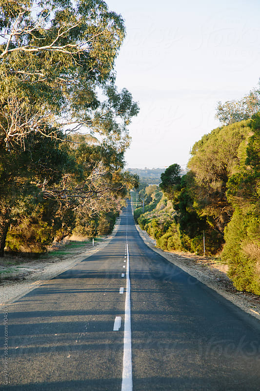 A straight road lined with gum trees in the country by Gary Parker for Stocksy United