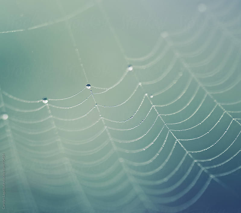Close up of a spider web laced with dew drops by Carolyn Lagattuta for Stocksy United