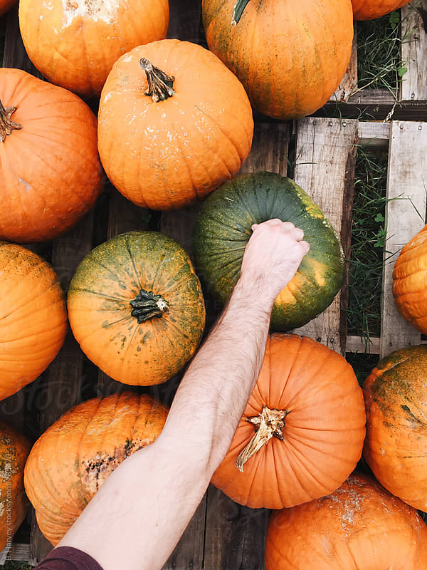 Afternoon at the Pumpkin Patch by B. Harvey for Stocksy United