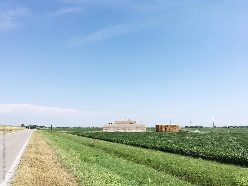 Countryside landscape, Polesine. by michela ravasio for Stocksy United