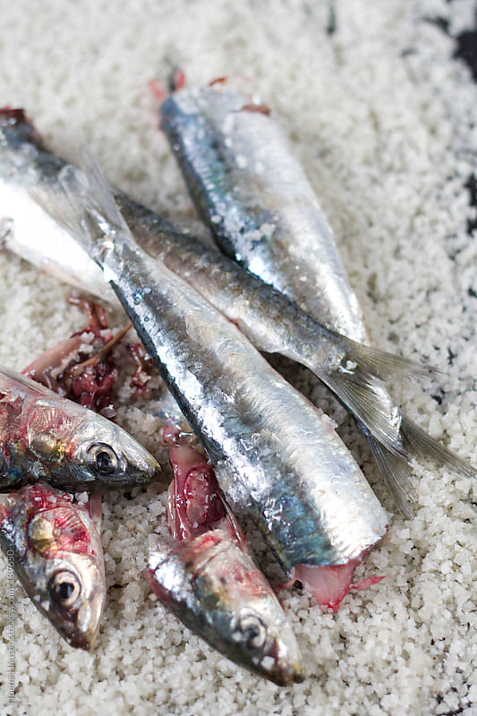 Sardines on sea salt by Noemi Hauser for Stocksy United