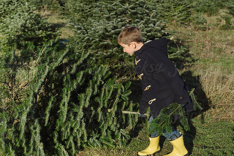 Little boy pulls Favorite Tree by Rebecca Spencer for Stocksy United