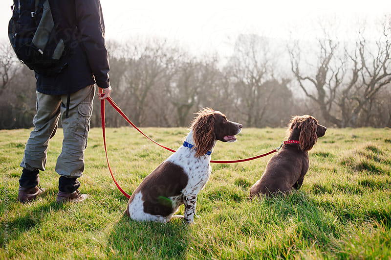 Man stands with two dogs on leads in a field by Suzi Marshall for Stocksy United