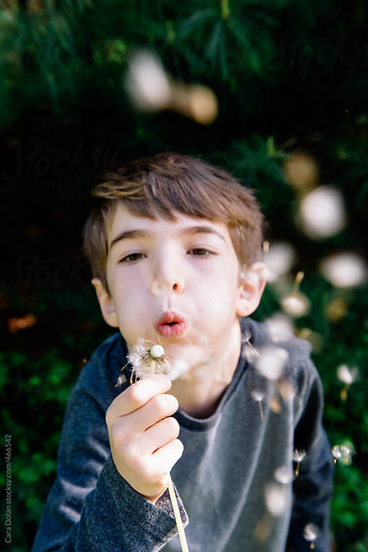Little boy blows dandelion seeds outside in summer by Cara Dolan for Stocksy United
