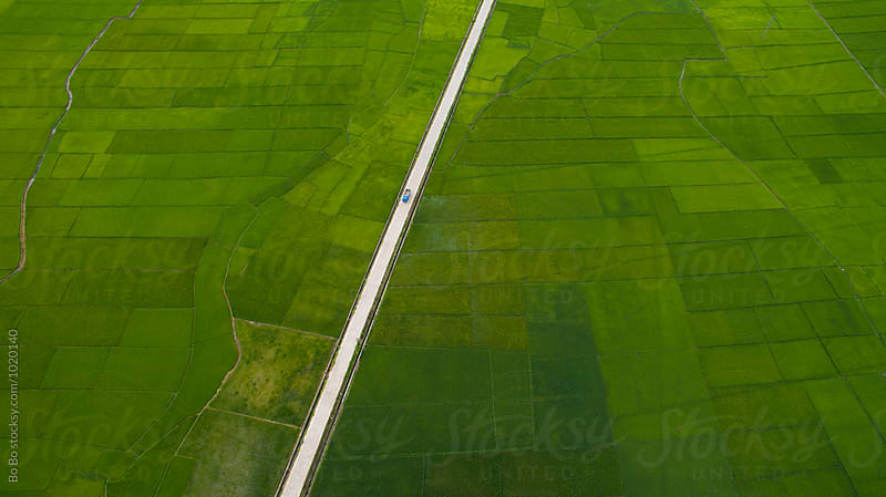 aerial view of rice paddy by Bo Bo for Stocksy United