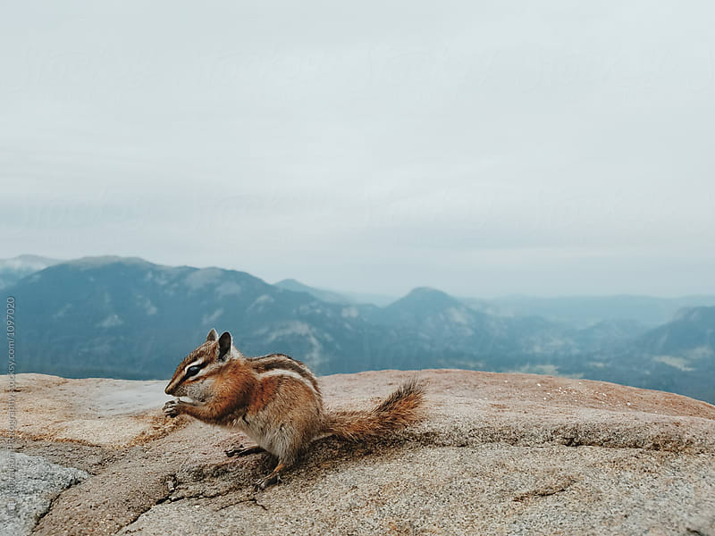 Chipmunk in the Rocky Mountains by Alicia Magnuson Photography for Stocksy United