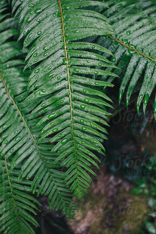 Wet, green ferns by Rob and Julia Campbell for Stocksy United