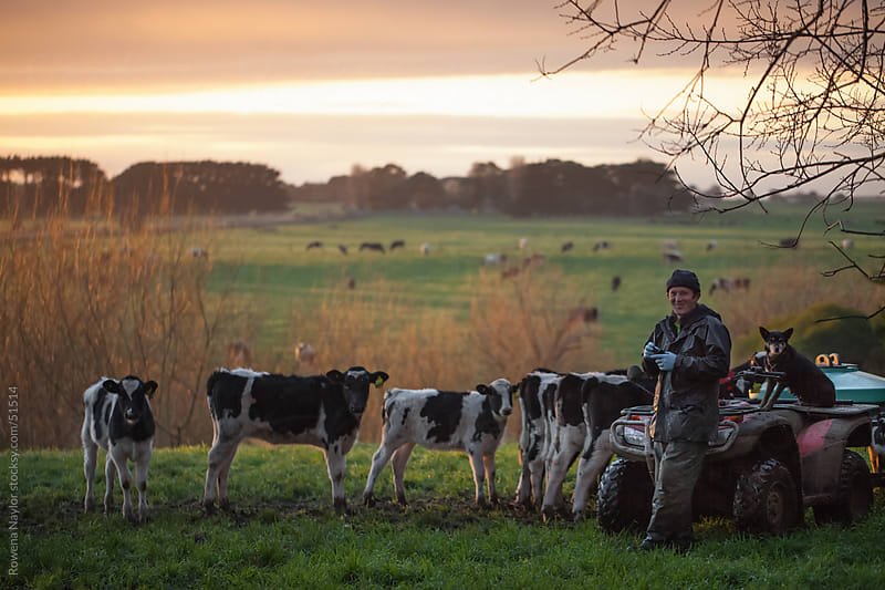 Happy Farmer Feeding Calves at Sunrise with Stunning Landscape by Rowena Naylor for Stocksy United