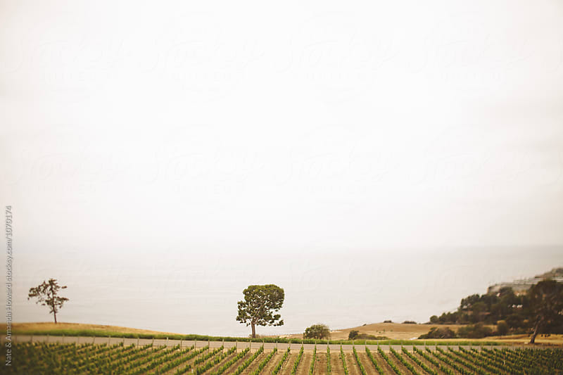 Vineyard Landscape by Nate & Amanda Howard for Stocksy United