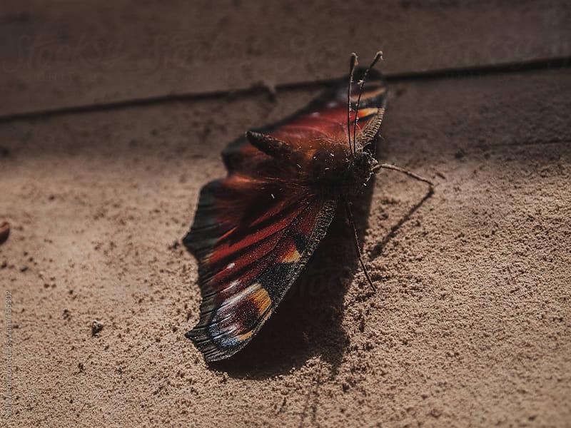 Dead Butterfly by Neil Warburton for Stocksy United