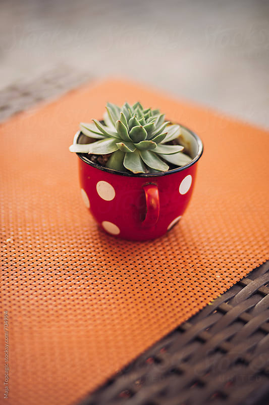 The guardian plant on a table by Maja Topcagic for Stocksy United