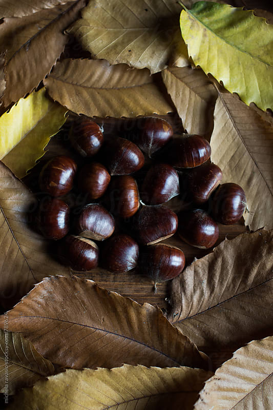 Chestnuts surrounded by chestnut leaves by michela ravasio for Stocksy United