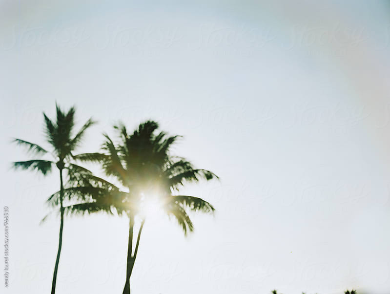 blurred palm trees with rainbow flare by wendy laurel for Stocksy United