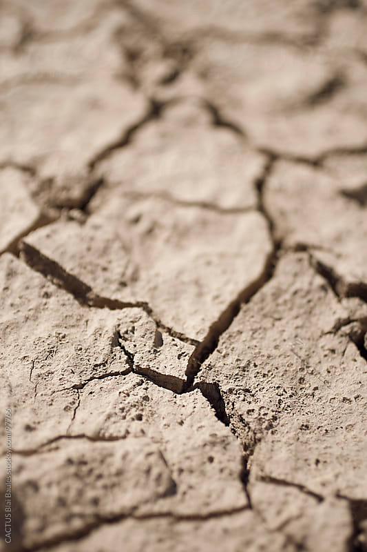 Drought  by CACTUS Blai Baules for Stocksy United