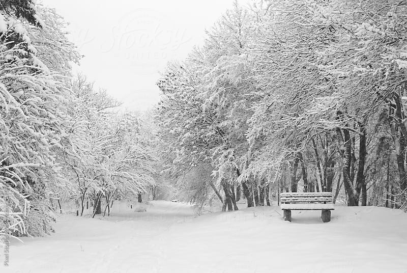 Snowy park by Pixel Stories for Stocksy United