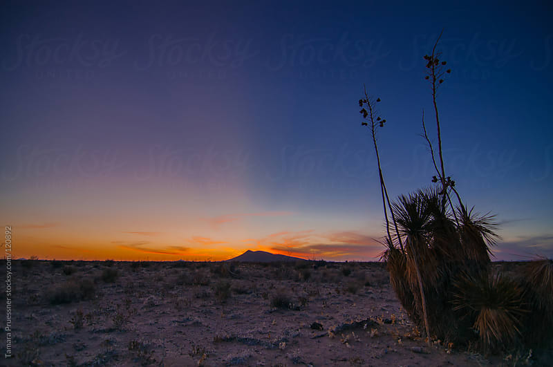 Desert Sunset With Rays And Yucca by Tamara Pruessner for Stocksy United