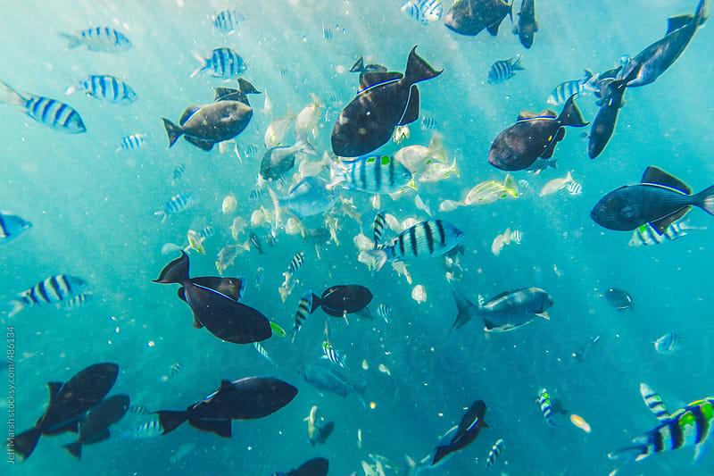 School of Fish by Jeff Marsh for Stocksy United