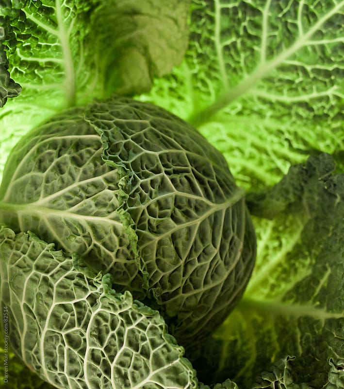 Abstract cabbage.  by Darren Muir for Stocksy United