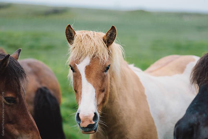 Horses  by Gabriel Tichy for Stocksy United