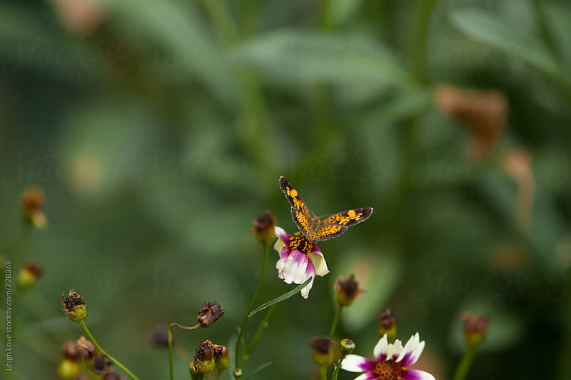 Butterfly On A Wildflower by Leigh Love for Stocksy United