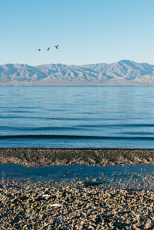 Birds flying. Salton Sea, California by Jeremy Pawlowski for Stocksy United