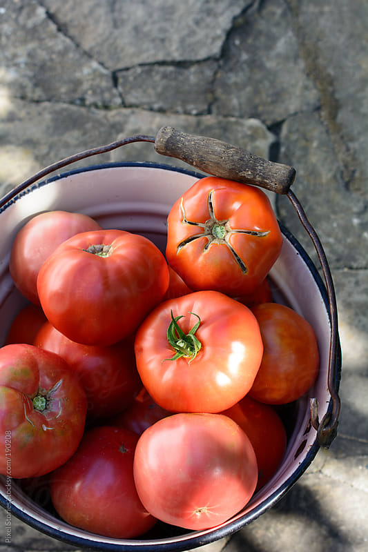 Bucket full of fresh tomatoes by Pixel Stories for Stocksy United