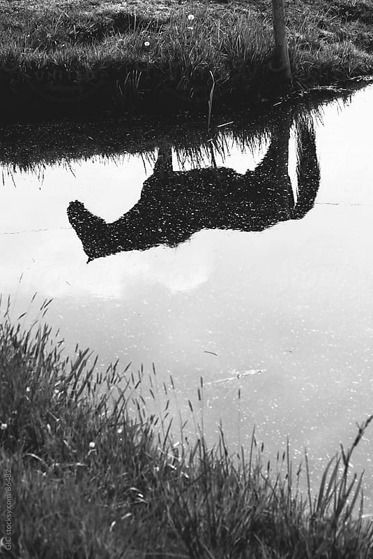 Horse reflected in the water by GIC for Stocksy United