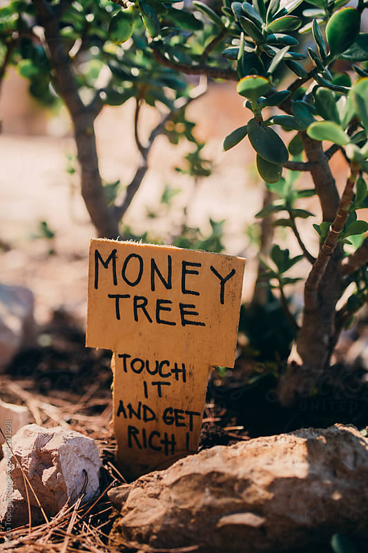 The money tree by Maja Topcagic for Stocksy United