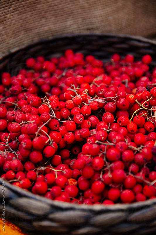 Rowanberry in a basket closeup by Andrey Pavlov for Stocksy United