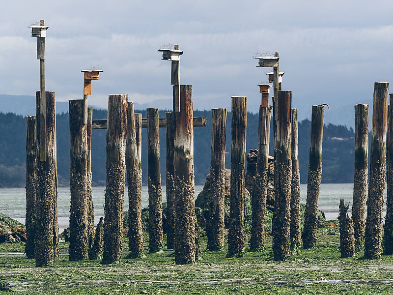 bird house on the beach by unite images for Stocksy United