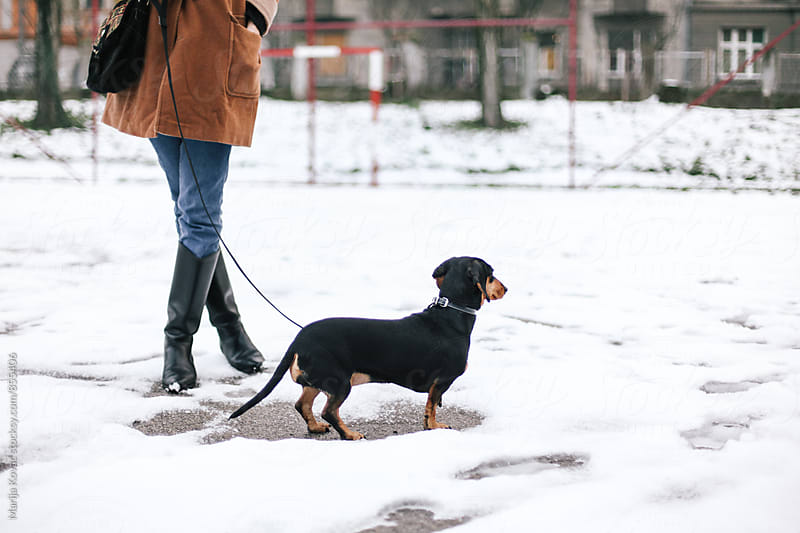 Black dog outdoor, winter  by Marija Kovac for Stocksy United