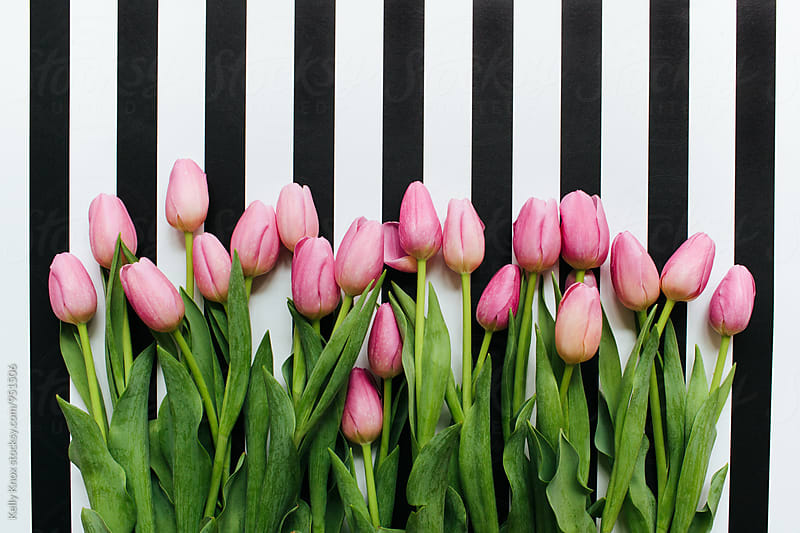 overhead image of pink tulips on a striped background by Kelly Knox for Stocksy United