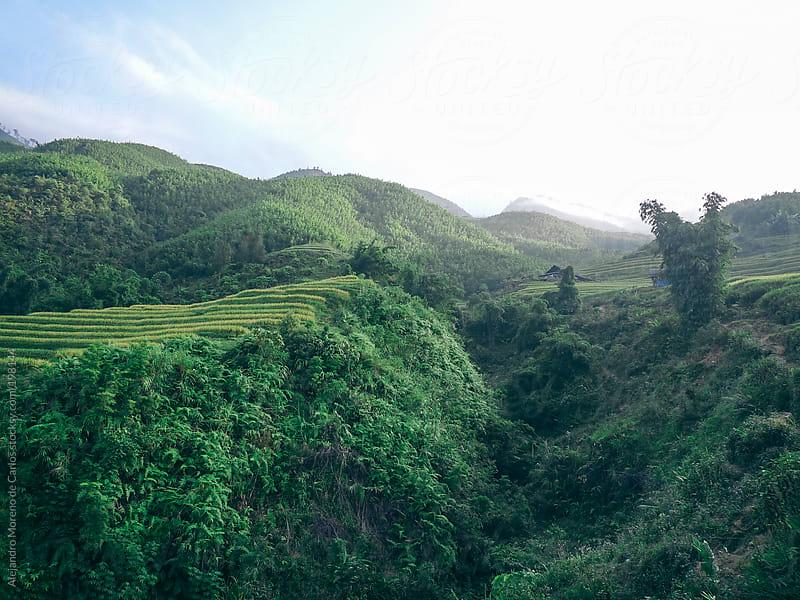 Rice fields mountain landscape in Vietnam by Alejandro Moreno de Carlos for Stocksy United