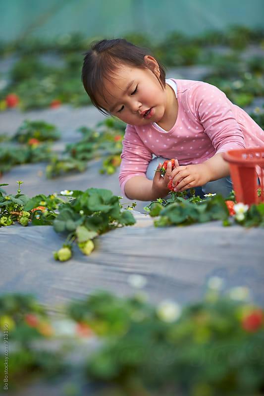 little asian girl picking strawberry by Bo Bo for Stocksy United