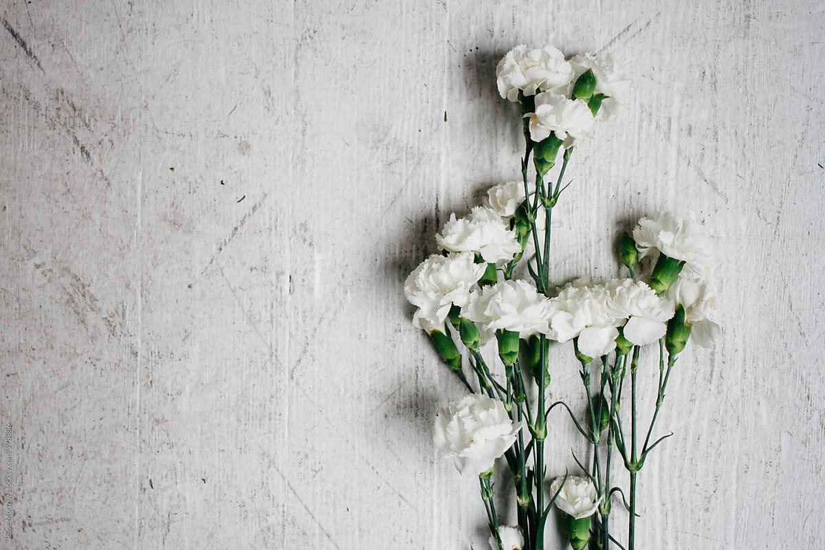 White carnation flower on wood grain floor ground surface stocksy white carnation flower on wood grain floor ground surface by jesse morrow for stocksy united mightylinksfo