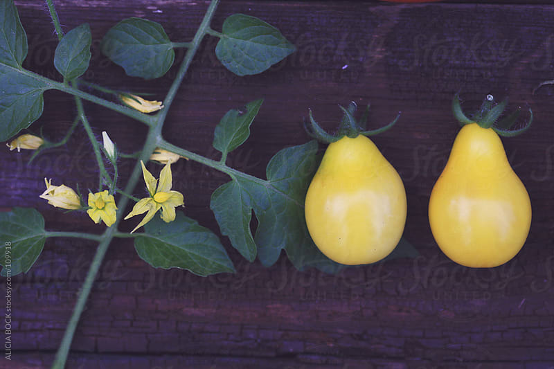 Two Yellow Heirloom Tomatoes by ALICIA BOCK for Stocksy United