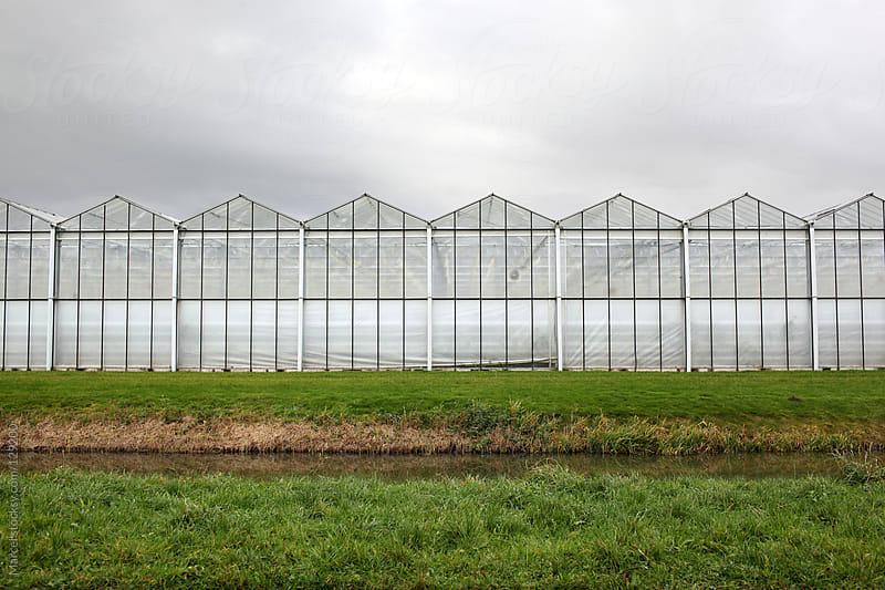 Industrial greenhouses  by Marcel for Stocksy United