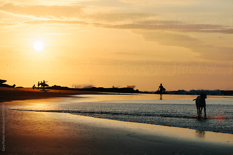 Silhouettes of a dog and some people enjoying the beach as the sun sets by Gary Parker for Stocksy United