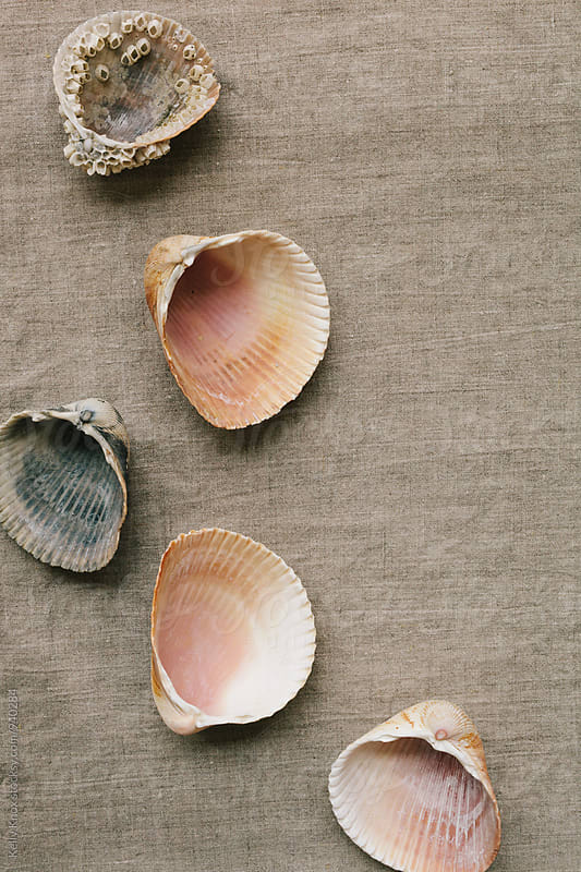 cockle shells scattered on a linen background by Kelly Knox for Stocksy United