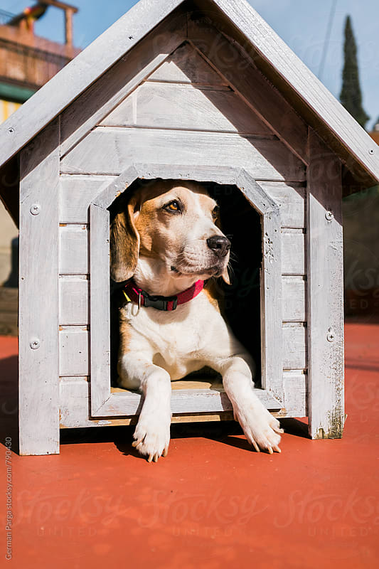 Dog in her house by German Parga for Stocksy United
