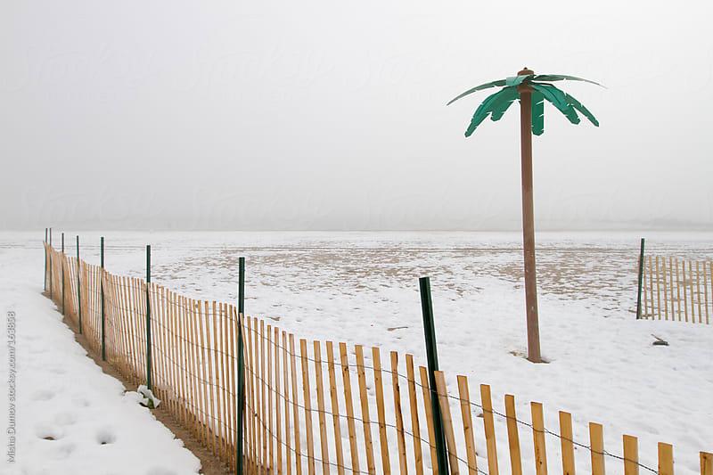 Fake palm tree on a snow-covered beach by Mihael Blikshteyn for Stocksy United