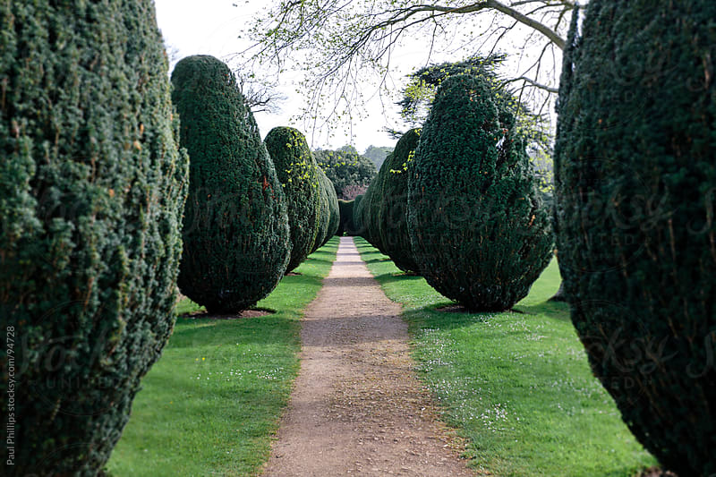 Pathway and row of Yew trees by Paul Phillips for Stocksy United
