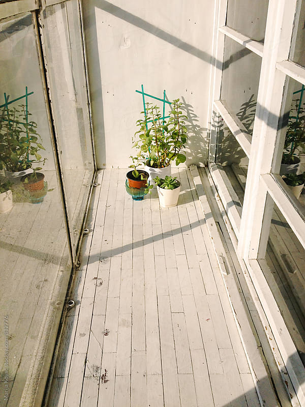 Plants at the window - vertical by Marija Kovac for Stocksy United