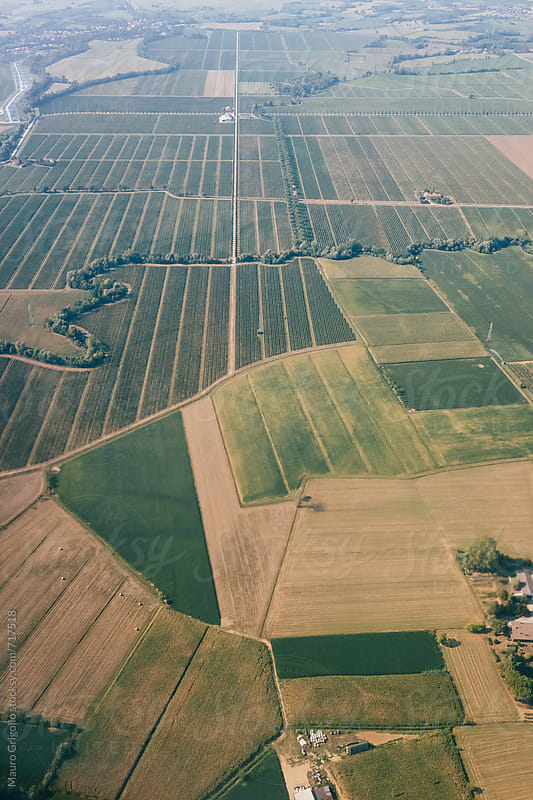 Aerial view of a cultivated land by Mauro Grigollo for Stocksy United