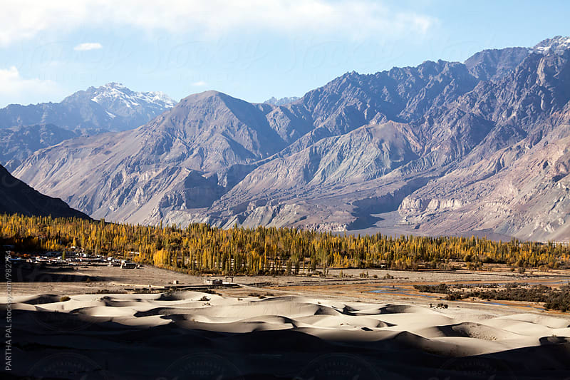 Sand dunes of Nubra Valley in Ladakh,India by PARTHA PAL for Stocksy United