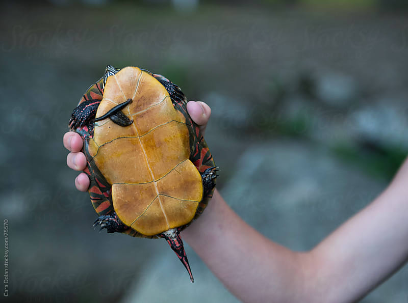 Child holds painted turtle with two leeches on its shell by Cara Slifka for Stocksy United