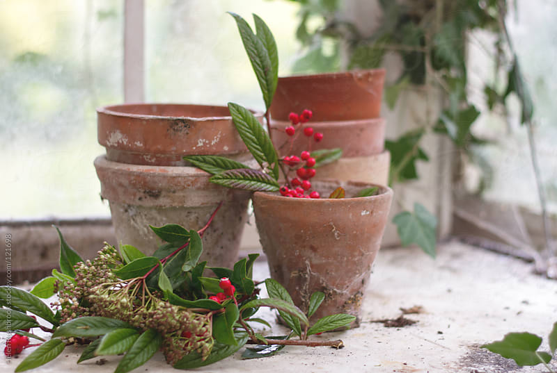 Aged terracotta pots and cut foliage on a bench. by Helen Rushbrook for Stocksy United
